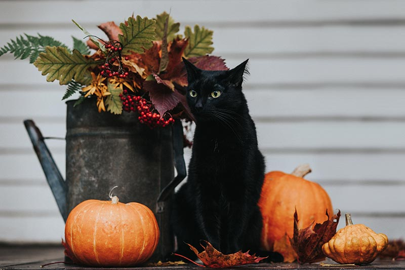 Halloween pet safety will keep your pets having Halloween fun
