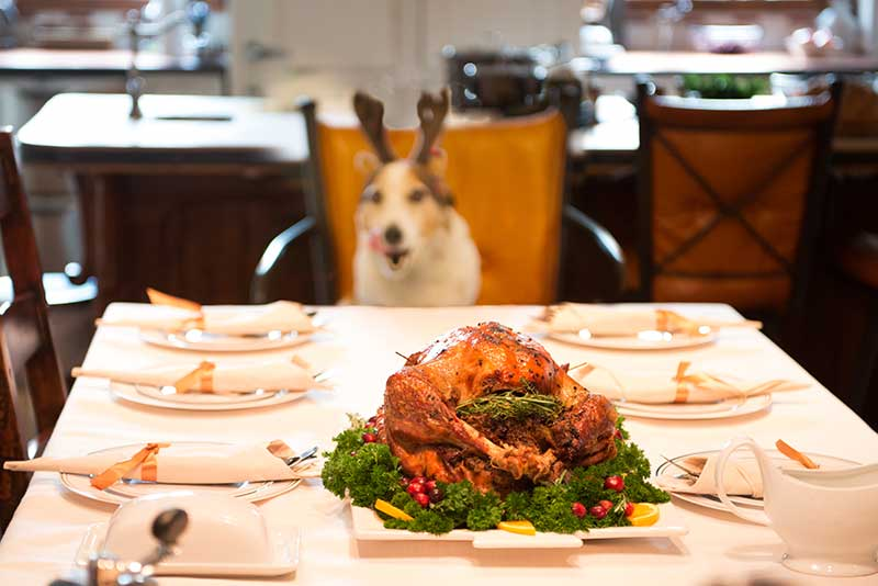 Pet Friendly Holiday Foods can help reduce the need for an emergency veterinarian