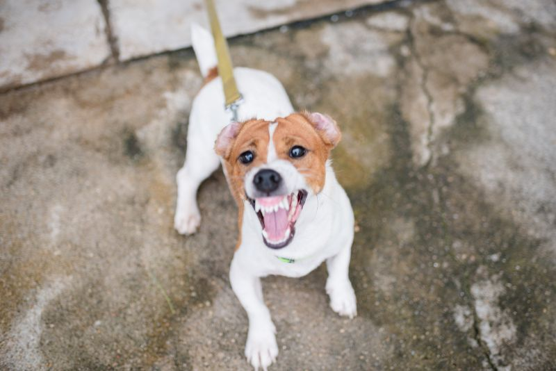 Understanding Aggression In Pets Harris Parkway Animal Hospital Harris Parkway Animal Hospital Blog